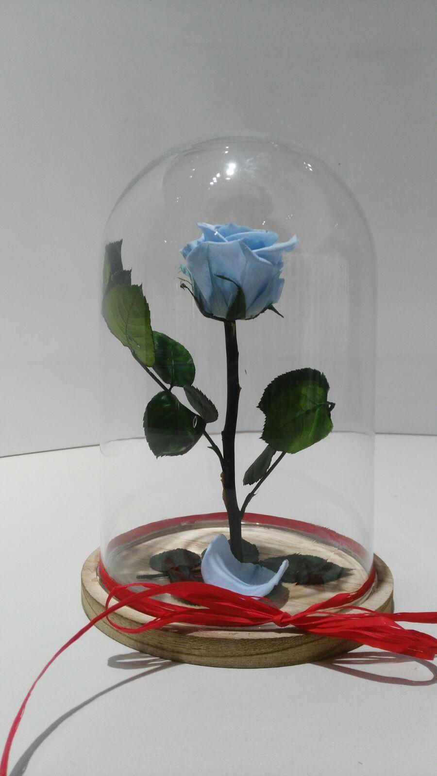 Significado De La Rosa Eterna El Verdadero Sentido