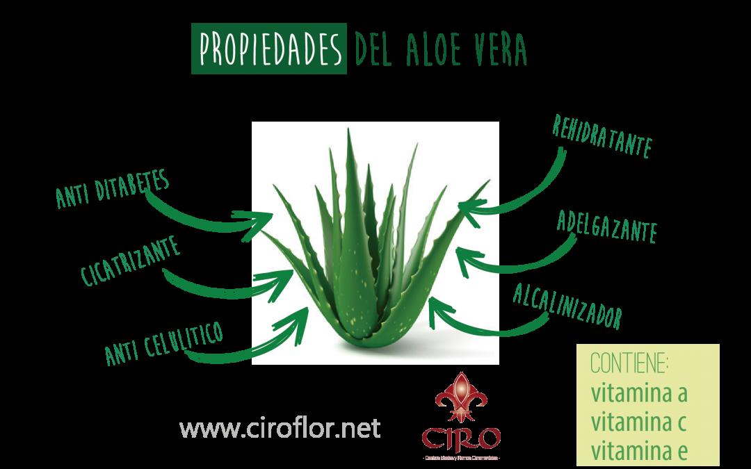 Aloe Vera: 10 razones para usar aloe vera natural