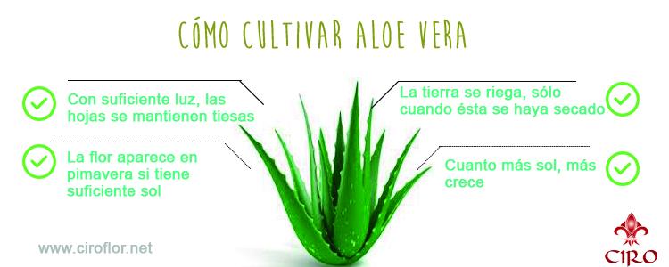 Aloe vera 10 razones para usar aloe vera natural c i r - Cuidados del aloe vera ...