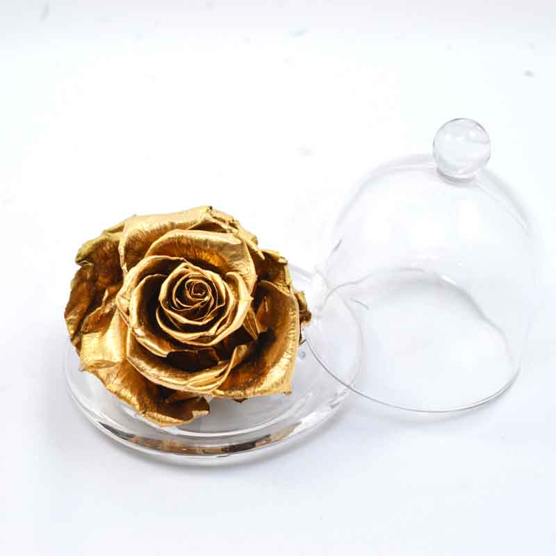 Rosa Eterna Bella y Bestia – Comprar Mini Rosa Eterna